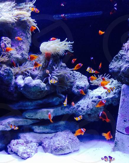 Nemo's photo