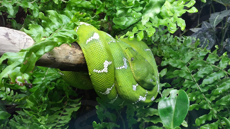 Terrarium snake nature green photo