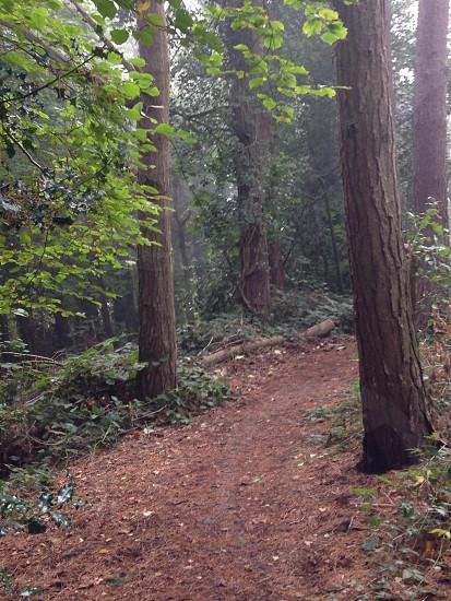 Woodland trail photo