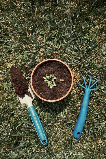 Replanting plant into a new pot. Top view of pot with flower and tools shovel and rake on bricks. Real people authentic situations photo