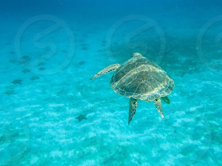 Sea Turtle and Starfish  photo