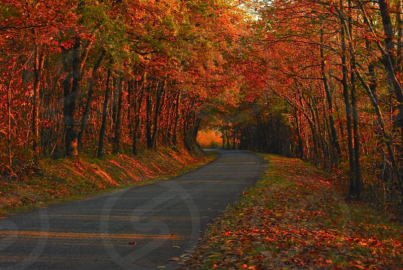 automne fall road forest foret trees arbres nature season saison photo