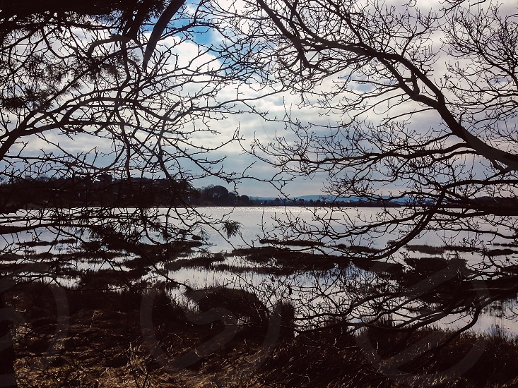 View through trees branches lake blue hills water nature reflections marsh photo