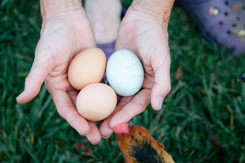 two brown eggs and one white egg photo