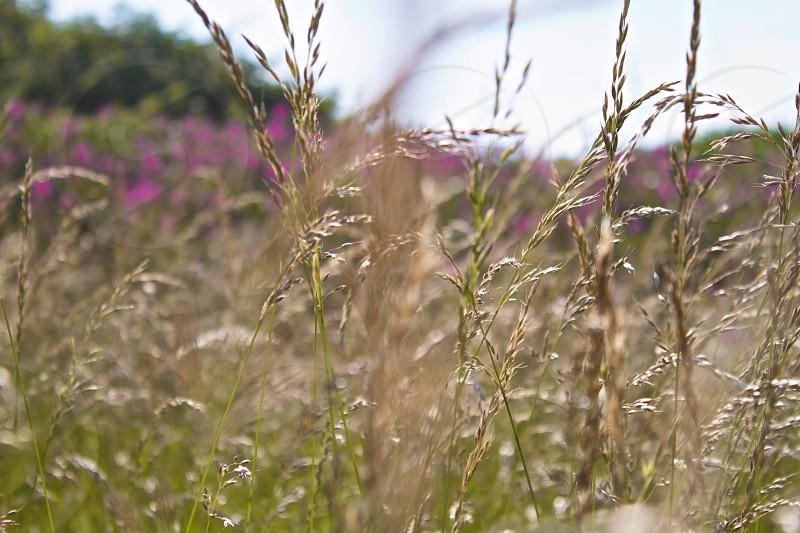 green weeds  photo