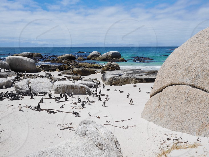 Penguins beach Boulders Beach  Cape Town  photo