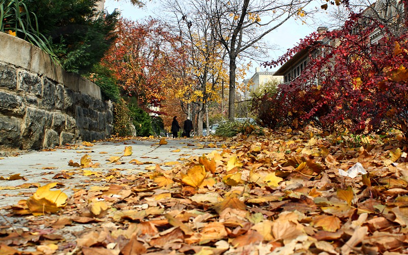Low angle perspective of autumn leaves on a city sidewalk photo