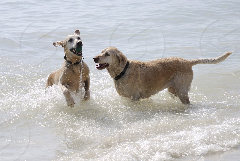 dog dogs action playing water ball  photo