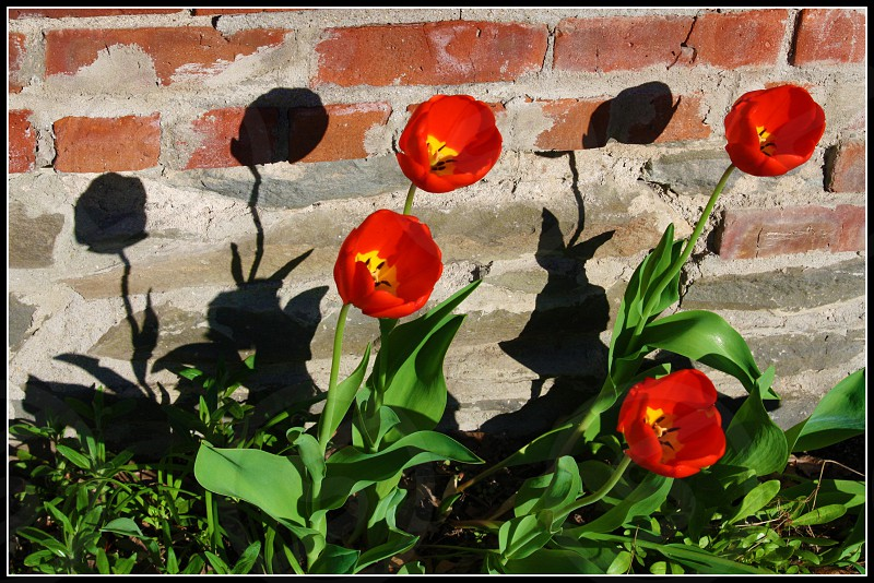 Flowers on the Wall photo