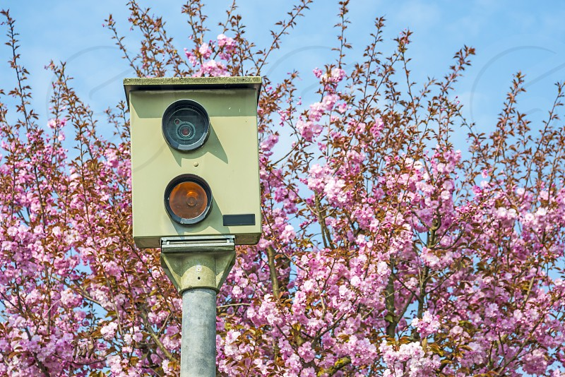 speed supervision machine with cherry blossom in Germany photo