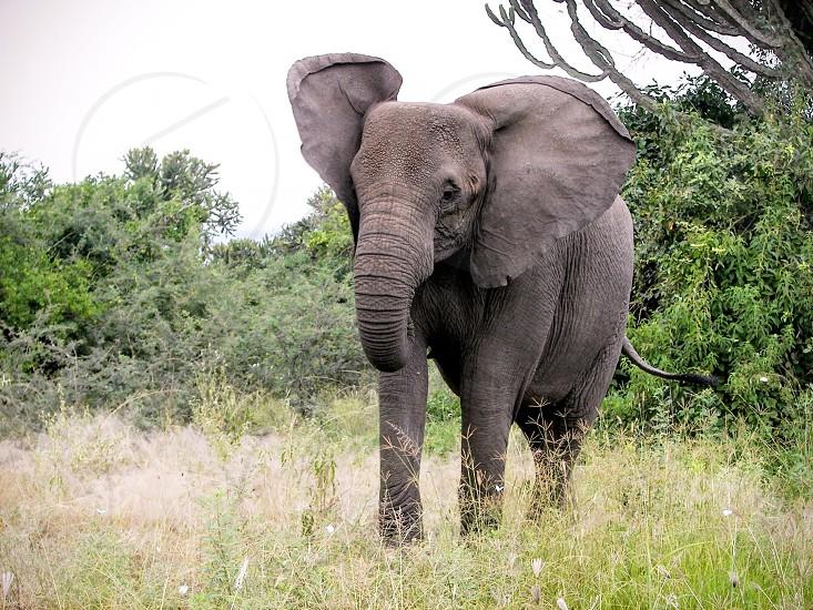 Save the elephants photo