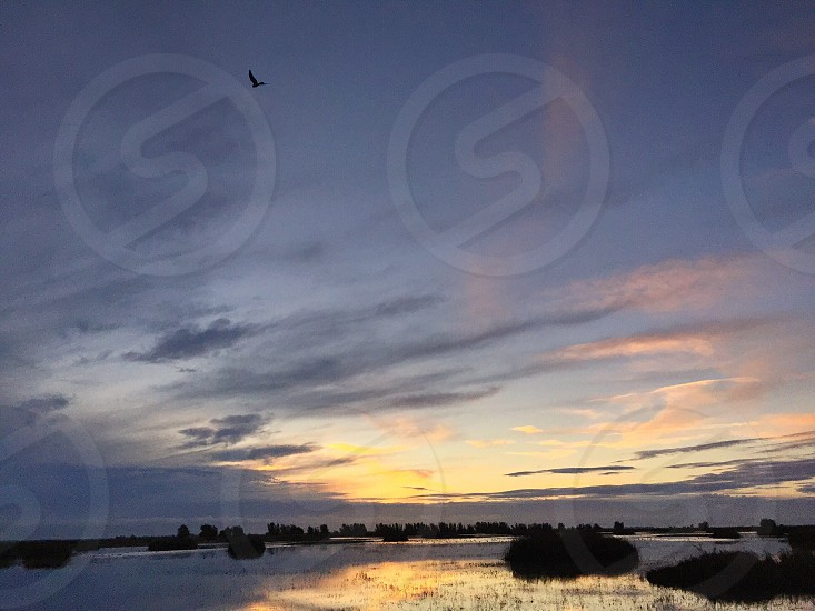 swamp and sky with flying bird photo