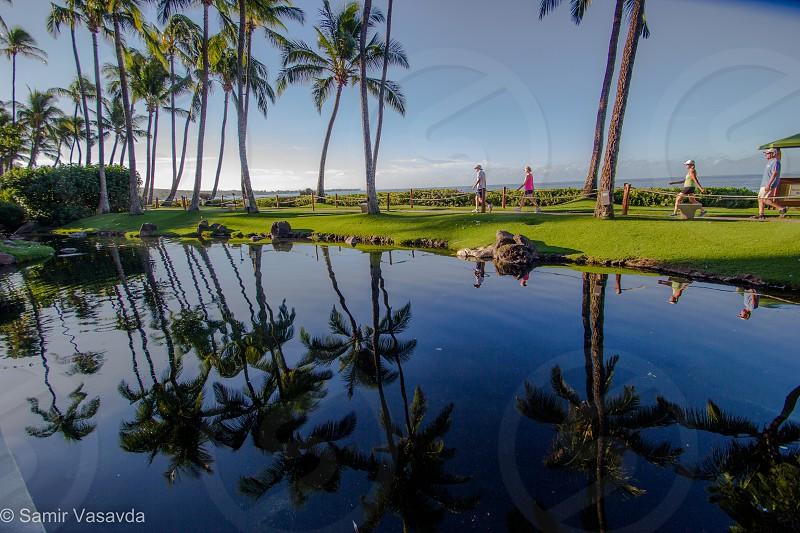 palm trees next to pond photo