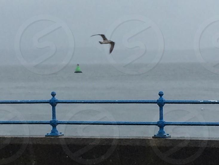 Fog on the Clyde photo