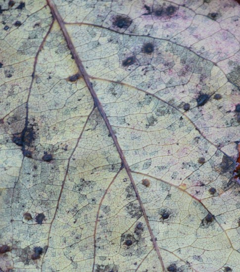 white leaf photo