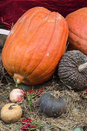 pumpkin on ground photo