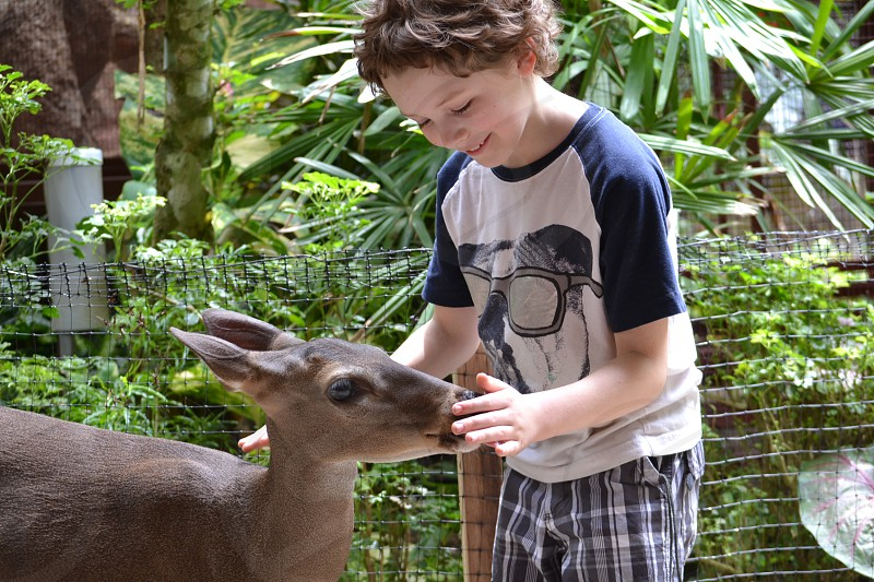 boy petting brown animal photo