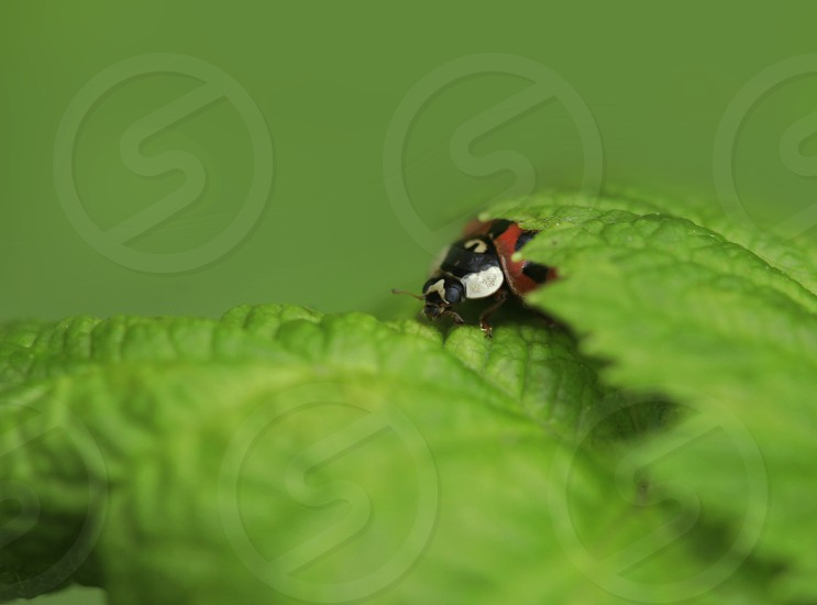red ladybug sitting on tree photo
