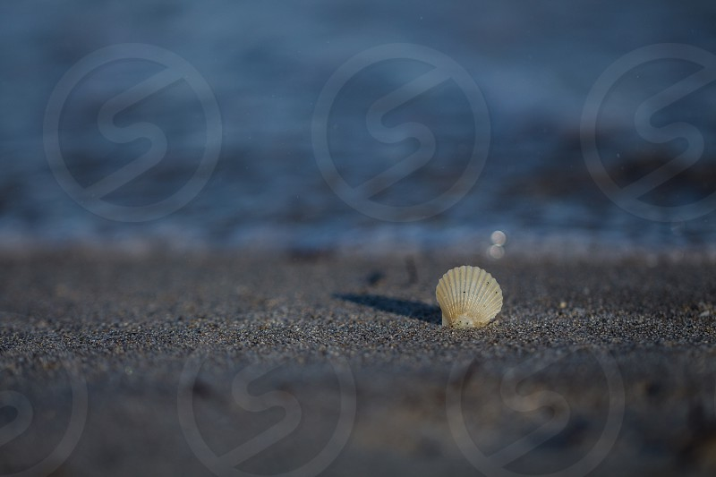 oyster in the beach photo
