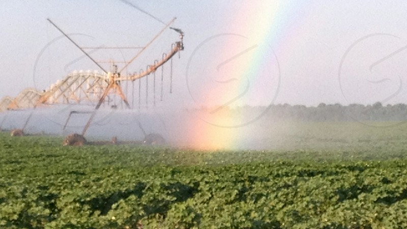 Soybean field with irrigator and rainbow photo