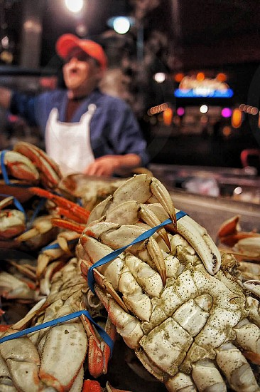 selective photo of blue tied up white and red crabs photo
