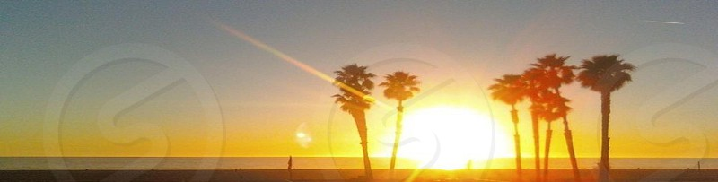 Palms and Sun photo
