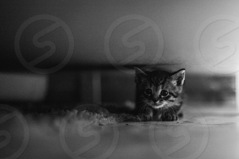 kitten cat cute  photo
