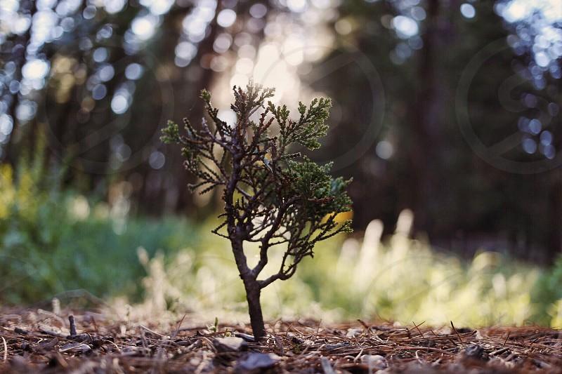 Treelittlelowsunlight  photo