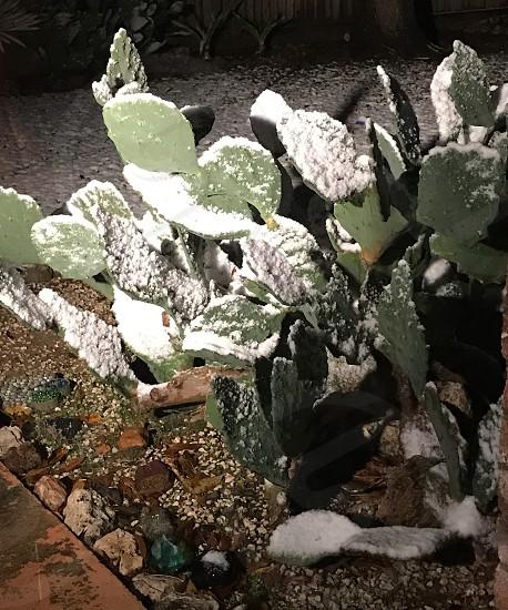 Catus;freeze;tropical;nature photo