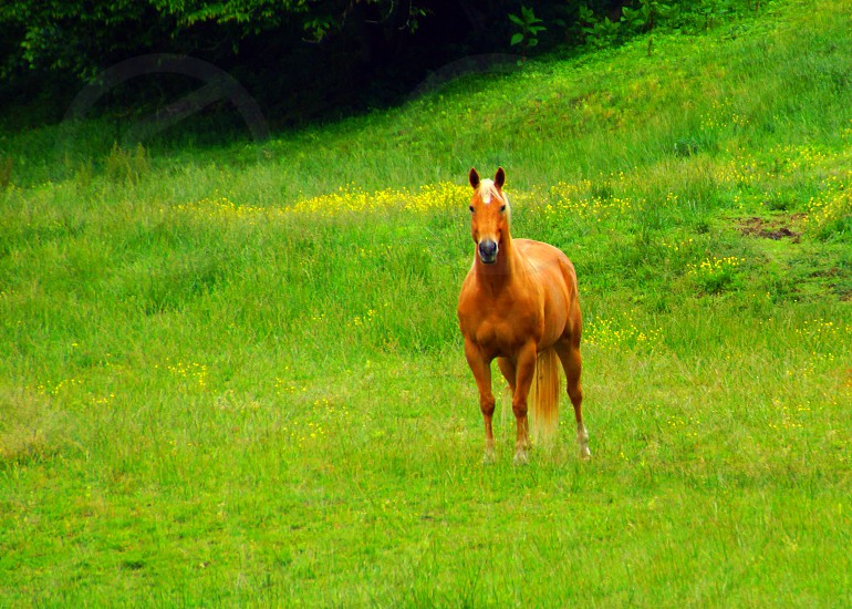 brown and yellow horse photo