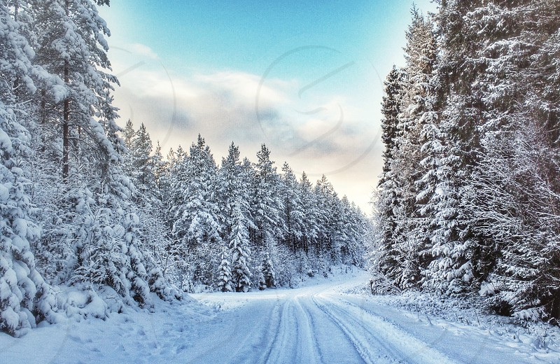 Road winter snow tracks snowy Sweden photo