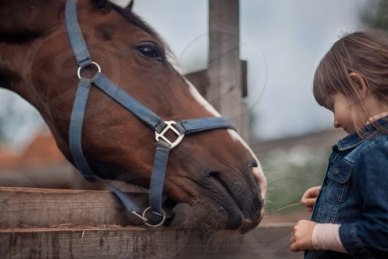 Girl little child childhood  spring summer sun nature yellow people portrait grass outdoor cowboy paddock farm horse stallion eat equestrian animals equine chestnut hat countryside working workers friends friendship wooden fence  photo