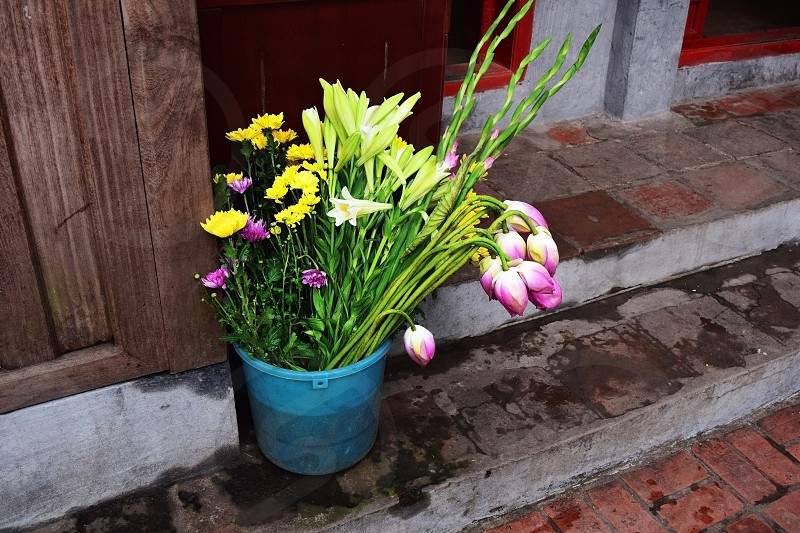 Flowers outside a temple in Hanoi photo