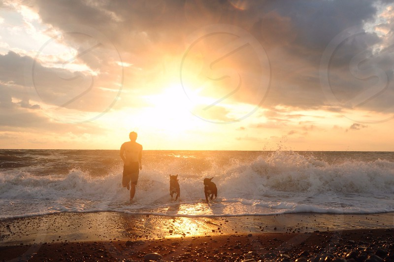 man and two dogs at beach photo
