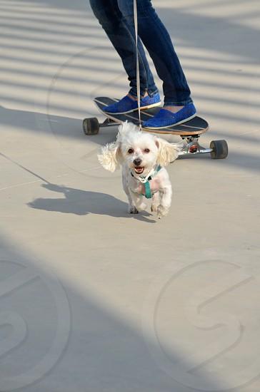 Cute Dog running photo