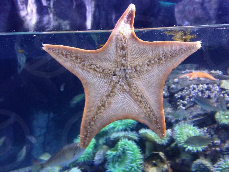 Star fish marine life water photo