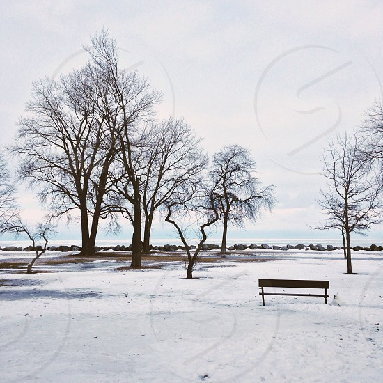 ||Bench Lake View|| photo
