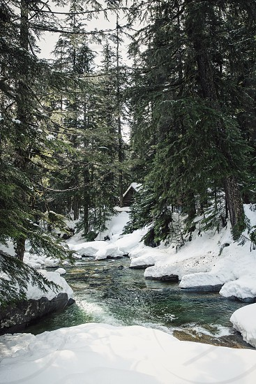 river between snow covered soil with pine trees during daytime photo