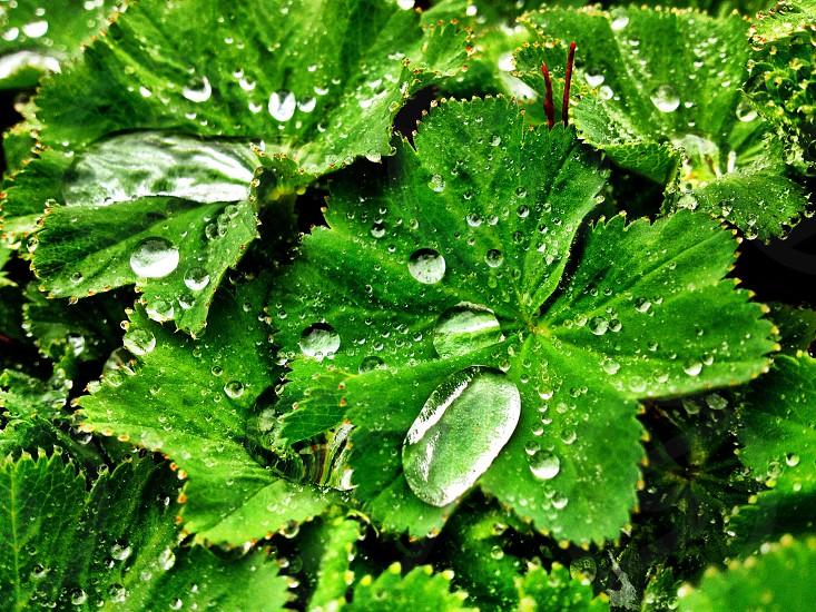Dew drops photo