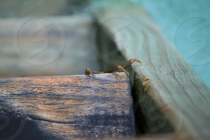 Hiding crab under a water villa in the Maldives photo