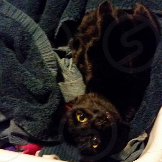 My cat Luna photo