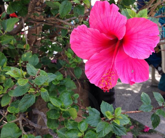 Flower nature plant photo
