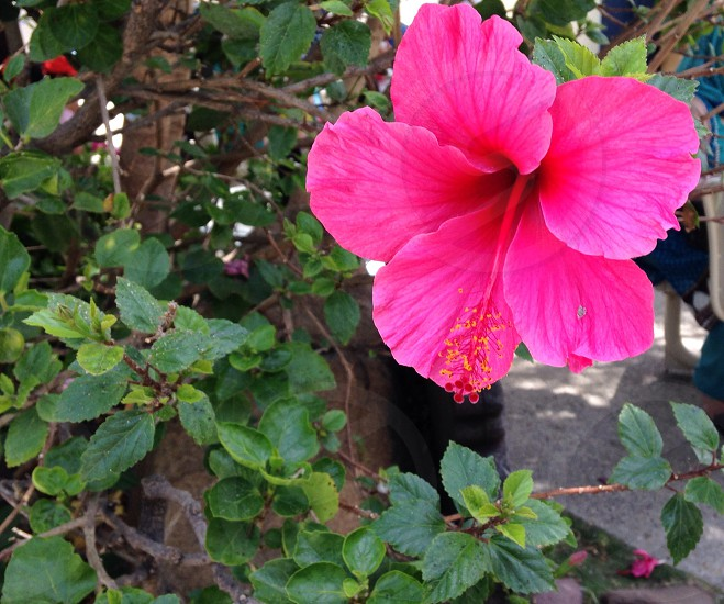 Flowernature plant photo