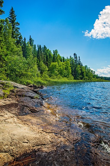 Lake coastline and forest trees in summer. Hiking in Quetico Provincial Park Atikokan Ontario Canada photo
