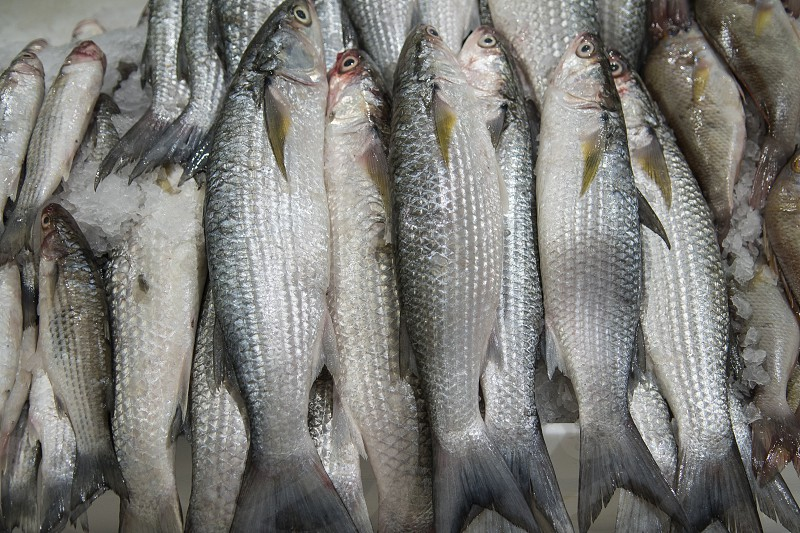 Fresh fish for sale at the modern fish market located in Dubai photo