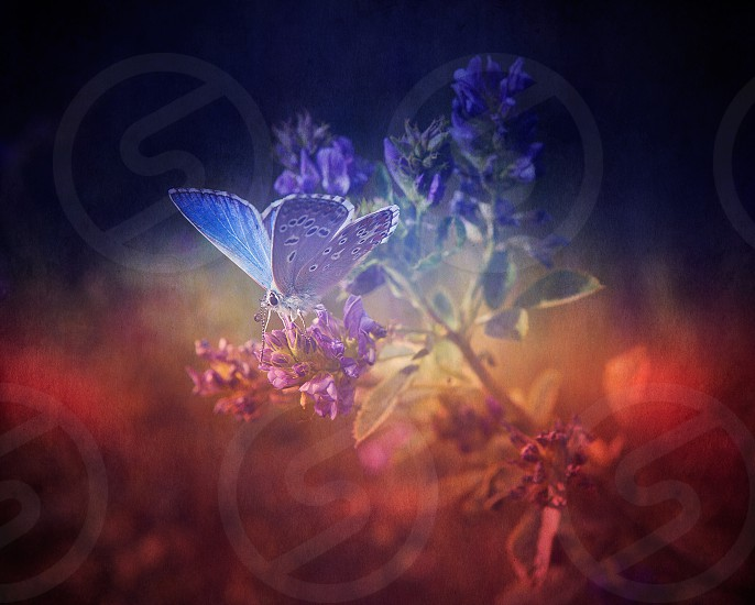 Closeup view of butterfly on flower photo