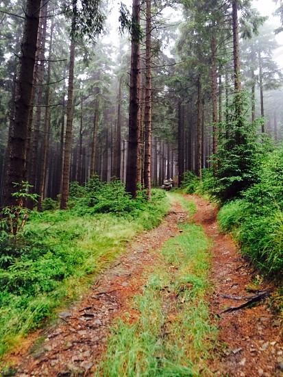 Ladek Zdroj Poland nearby national forest.  photo