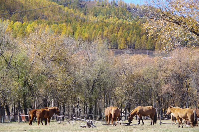 Fall of Mongolia photo