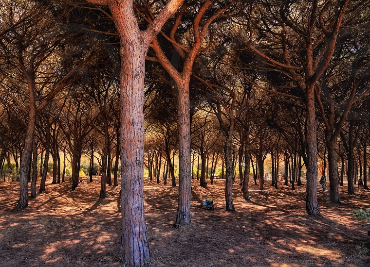 Bush forest tree light magic landscape  photo