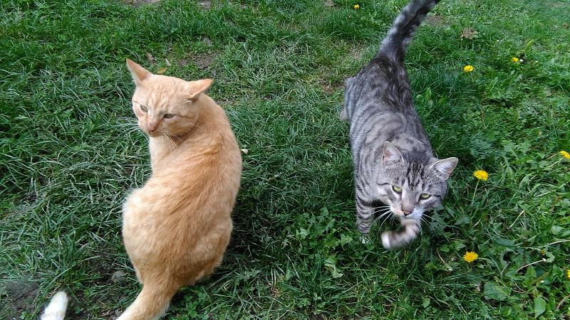 my beautiful cats photo